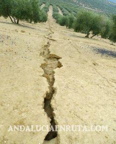 Olivar erosion